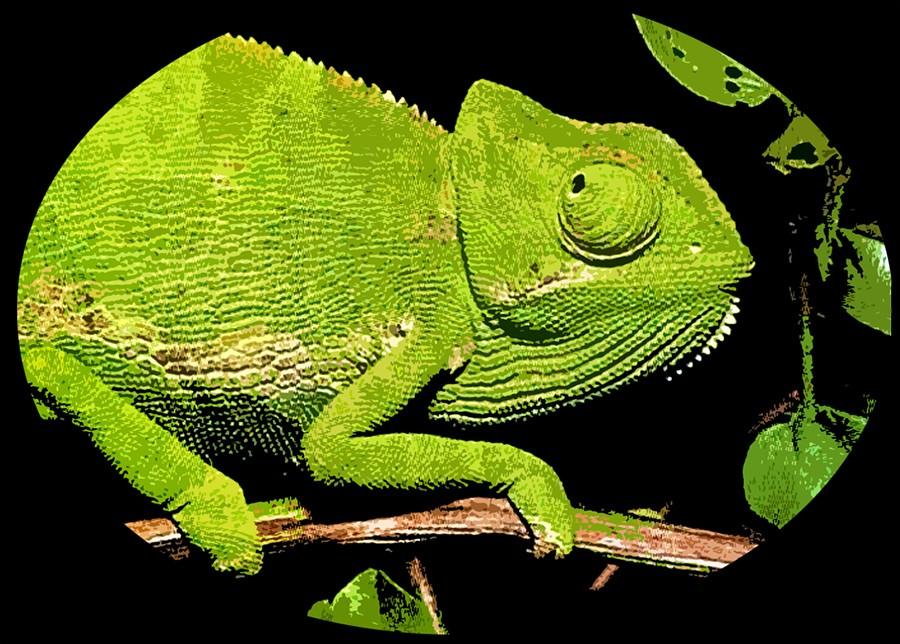 Chameleon Courses